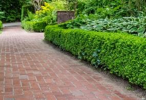 garden-shrubs