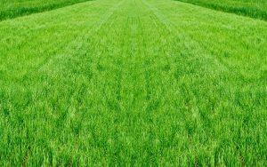 Sprawling Lawn