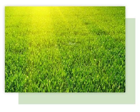 bermuda zoysia grass atlanta