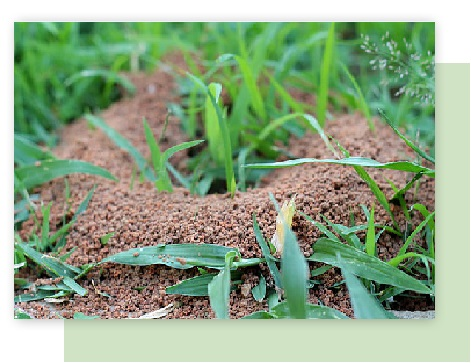 fire ant control in atlanta