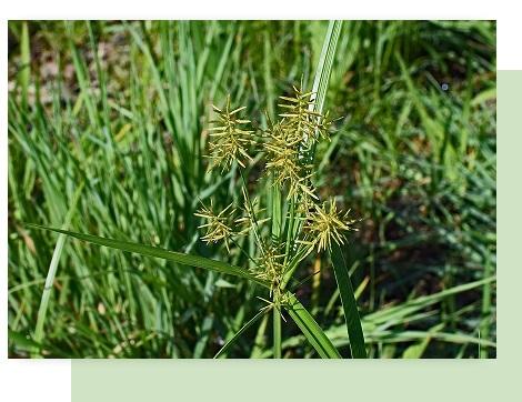 weed control in atlanta
