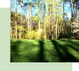 deep root fertilization special atlanta