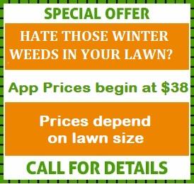 Broadleaf Weed Control